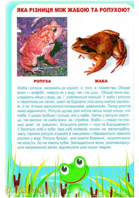 http://img.zoneland.ru/images5/944140UMIJKO_803.jpg.jpg