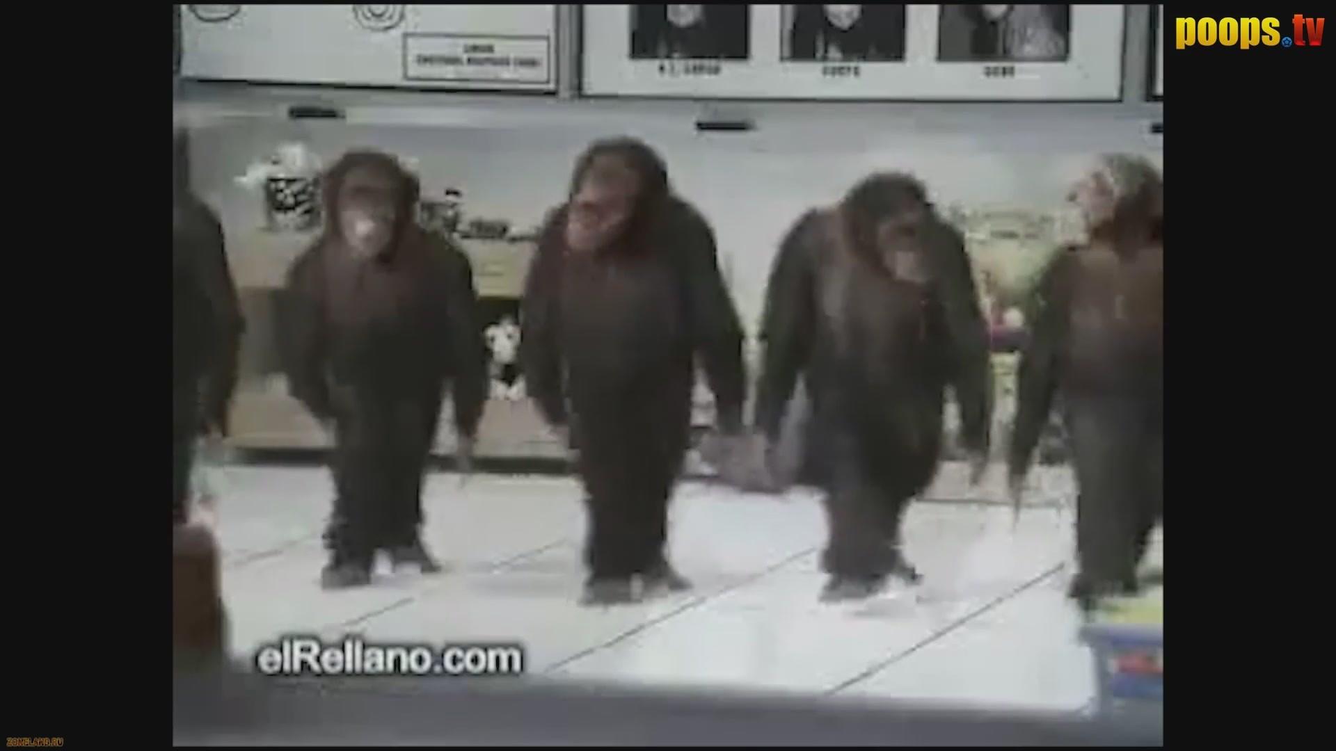 Зоофилия порно с животными смотреть онлайн бесплатно